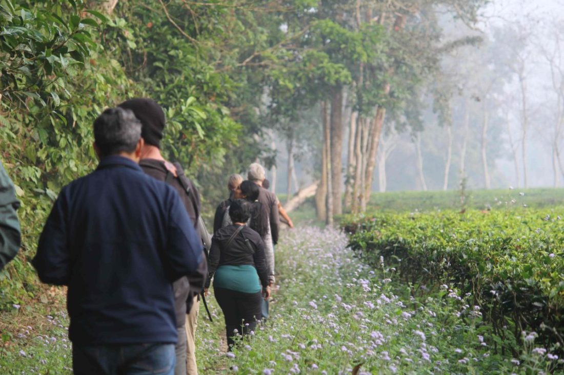 A path which is an intersection between the forest and tea gardens