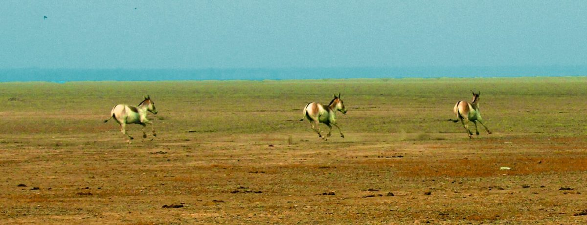 A Journey into the Little Rann of Kutch