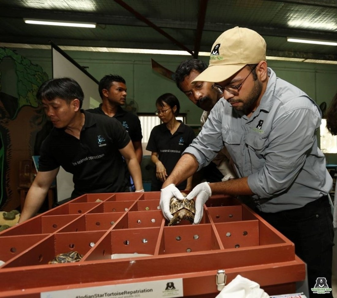 Wasim Akram-Wildlife SOS Manager Special Projects with the Indian Star Tortoises at ACRES, Singapore