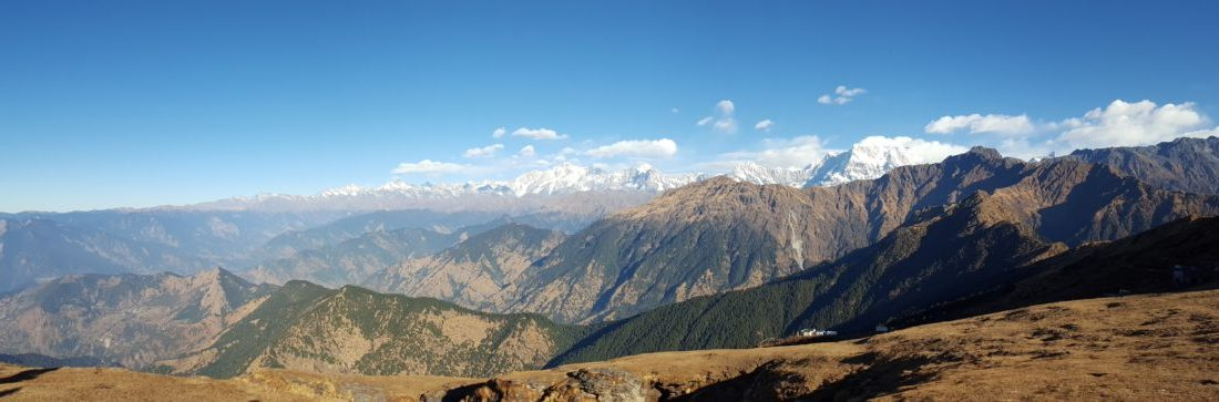 Chopta and Tungnath: pheasant paradise