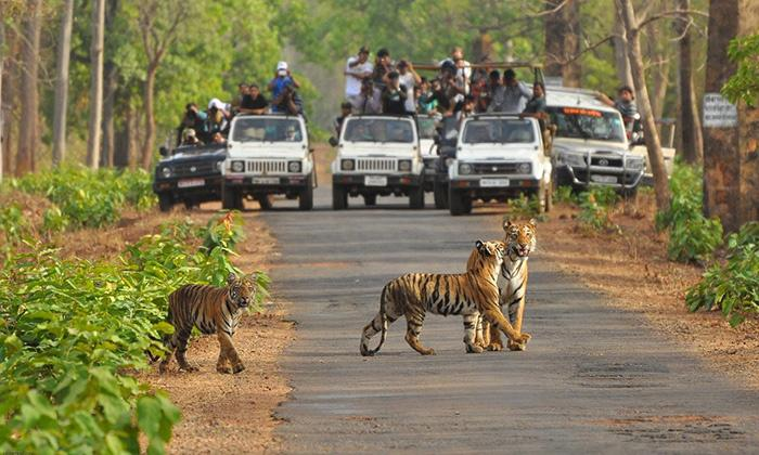 Tiger Reserves in Maharashtra impacted by tourism facilities