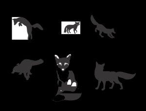 Red Fox – The Vulpes Versatile