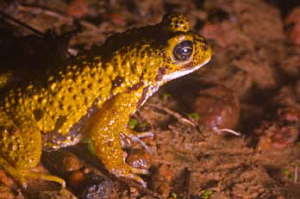Plateaus In The Northern Western Ghats - An Abode To The Unique Faunal Diversity