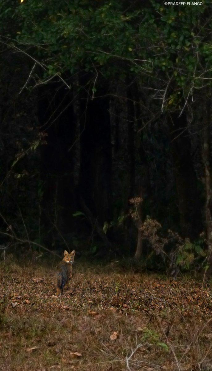 Chance feline encounter