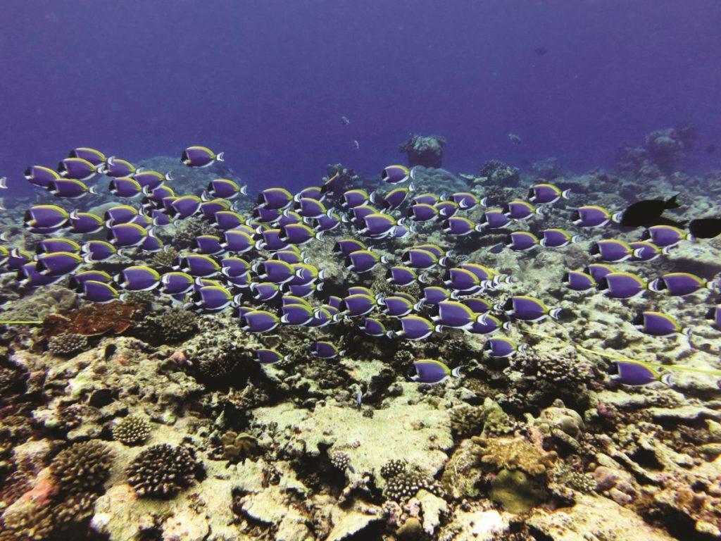 Gardeners of the Reef