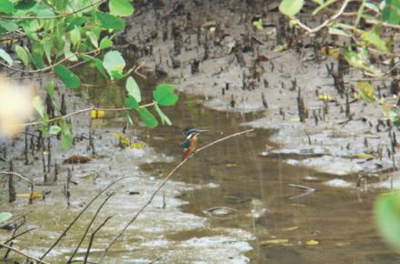 Magazine   Wildlife   Conservation   Photography   Travel   Natural History