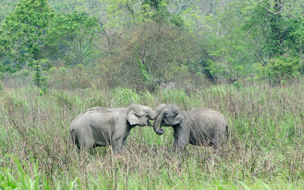 From rides to rescue centers : a transition for captive elephants