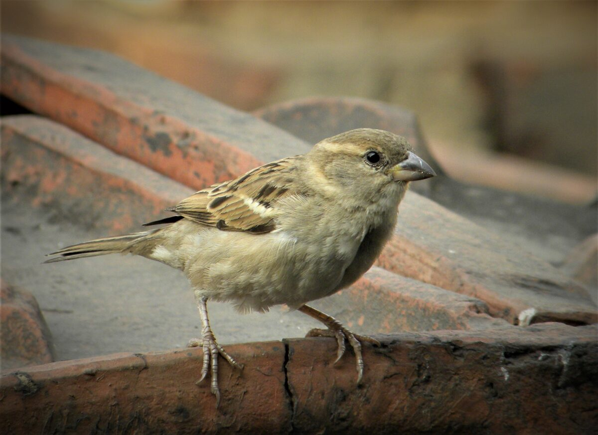 Sparrows: Revive the emotional connect