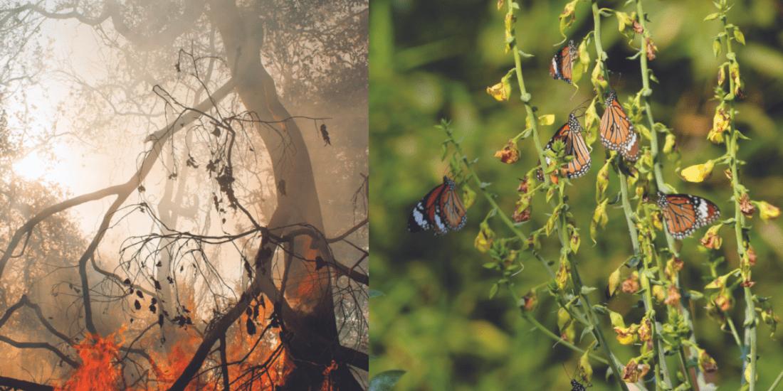 Grey to Green: Resurrection of Nagla