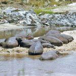 Masai Mara can get a little overrun at times.