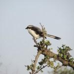 In Kenya the birdlife in Kenya is good year-round