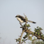 In Kenya the birdlife in Kenya is good year-round