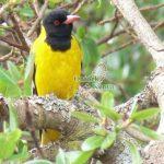 http://www.ontdekkenya.com/E/bird-photography/bird-species-identification.html