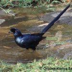 http://www.ontdekkenya.com/E/bird-photography/common-birds.html