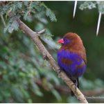https://thewildernessalternative.com/2013/12/27/birds-of-kenya/kenya-birds-40/