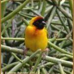 http://www.pbase.com/pbannon/birdsofafrica