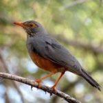 https://www.pinterest.com/kenyasafaritrip/bird-watching-kenya-safari/