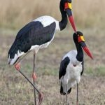 https://www.pinterest.com/kkbelle/birds-of-africa/