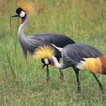 http://herontoursandsafaris.com/bird_watching_safaris.html