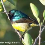 http://www.ontdekkenya.com/E/bird-photography/online-bird-identification.html