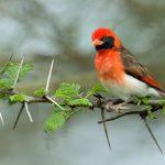 http://www.fratetours.co.ke/birds.php