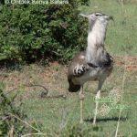 http://www.ontdekkenya.com/E/bird-photography/how-to-identify-birds-by-habitat.html