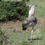 http://www.ontdekkenya.com/E/bird-photography/how-to-identify-birds-by-habitat.html