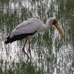 http://benefactours.com/listings/kenya-birds-and-wildlife-tour/