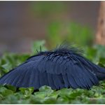 https://thewildernessalternative.com/2013/12/27/birds-of-kenya/kenya-birds-25/