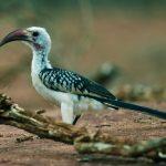 http://antpitta.com/images/photos/non-neotropics/kenya/aug-sep-2012-birds/gallery_kenya_2012_birds4.html