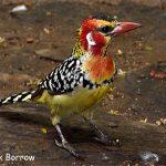 http://www.birdquest-tours.com/gallery.cfm?TourTitle=KENYA