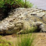 There are 33,000 crocodiles at Collins Mueke's crocodile farm, a 300-acre facility 180km from the capital Nairobi