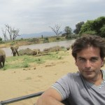 Elephants belong to the Vertebrata subphylum