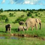 The threat to eastern African elephant populations is increasing
