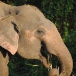 Threat to African elephant populations in Eastern Africa is increasing
