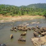 Threat to the Eastern African elephant populations is increasing as poaching is rising
