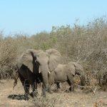 Elephant has a complex consciousness