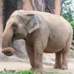 Elephant is capable of strong emotions