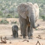 The elephants have complex consciousness and strong emotions