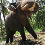 The elephant has complex consciousness and strong emotions