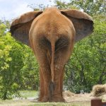 Across Africa elephants have inspired respect from the people
