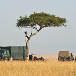 Open safari vehicles allow for spectacular views