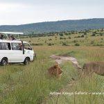 http://www.arlomkenyasafaris.com/index.php/nairobi-safaris/safaris-from-nairobi/7-days-kenya-safari-to-samburu-mountain-lodge-lake-nakuru-lake-naivasha-and-masai-mara-safari-from-nairobi