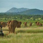 http://www.aardvarksafaris.co.uk/safari-in-kenya-alongside-conservationist-and-tv-presented-saba-douglas-hamilton/