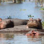 http://www.bestcampingkenya.com/camping-safaris/bcts-3-4-12-days-masai-mara-lake-nakuru/