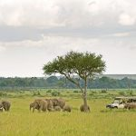 http://www.africaboundadventures.com/african-accommodation/sanctuary-olonana