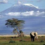 http://fb.junkmail.co.ke/travel-tourism/holiday-weekend-packages/africa/ke/nairobi/nairobi/best-nairobi-kenya-day-game-drive-one-day-amboseli-wildlife-safari-299771.html