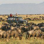 http://safari-consultants.com/on-safari/safari-activities-special-interests