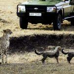https://artofsafari.travel/what-to-do/luxury-safaris-masai-mara/going-safari-magical-masai-mara/