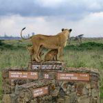 http://www.eastafricashuttles.com/nairobisafari-excursions/Nairobi-excursions/Nairobi-Nationalpark.htm